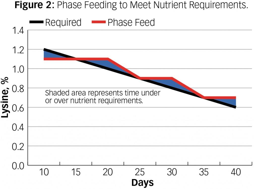 Phase_Feeding_2